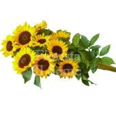 Long stem sunflower bouquet