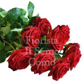 Long stem red rose bunch