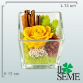 Square Glass Pot arrangement with Stabilized Rose